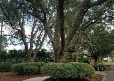Bush and Tree Commercial Landscape