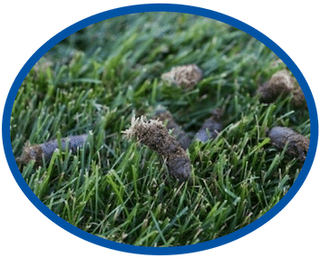 Core Lawn Aeration