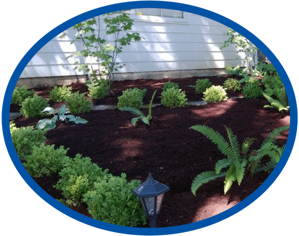 Landscape Plant Installation