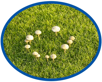 Lawn Fungus Treatment Cost