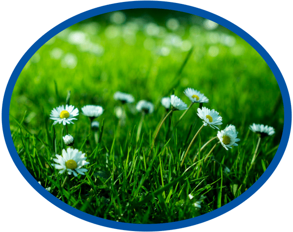 Lawn Weed Management