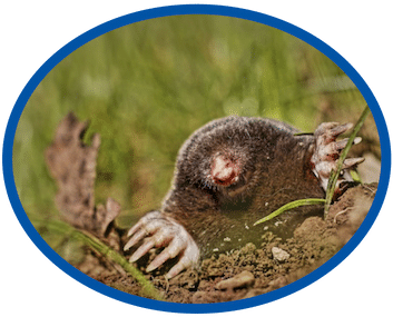 Cost of Mole Removal Service Wilmington