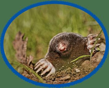 Mole Removal Service Wilmington