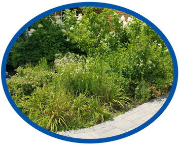 Overgrown Landscape Management