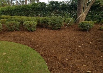 Pine Straw Installation Wilmington