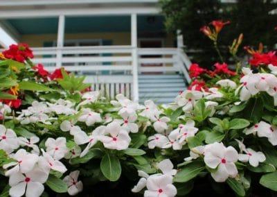 Seasonal Flowers Wrightsville Beach