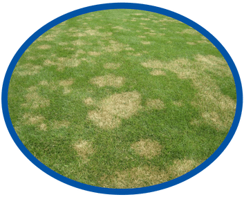 Turf Disease Treatment